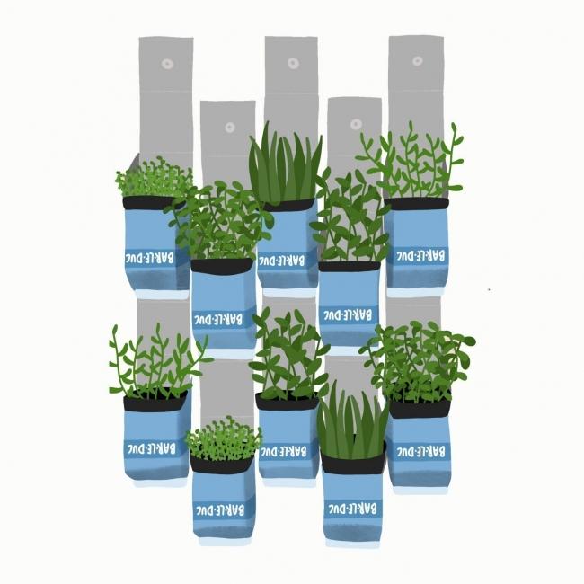 Carton garden, a reuse project